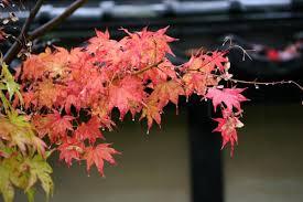 もうすぐ秋ですね